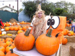 Wilshire Rotary opens pumpkin patch on Blvd.