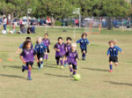 Hollywood Wilshire AYSO grows in popularity as fall season kicks off