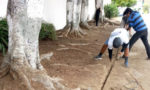 Sustainable landscape project underway at L.A. High