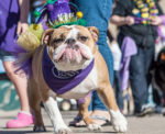 Celebrate Mardi Gras, St. Pat's Day at Farmers Market