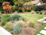 Say goodbye to those big water bills, use native groundcover
