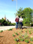 Native plants used in new look for traffic triangle