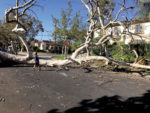 Quiet crisis: Saving trees in Los Angeles, and city's livability
