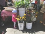 Larchmont Farmers Market: popular summer and year-round attraction