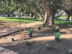 New water-wise plants and trees for Harold A. Henry Park