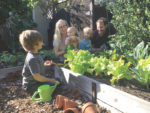 Whether for comfort or sustenance, 'victory gardens' are flourishing